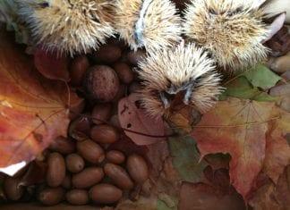 Herbstspiele mit Kastanien für Babys und Kleinkinder